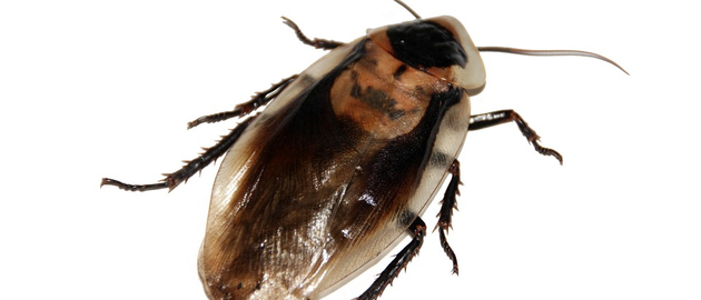 Cockroach 566712 960 720