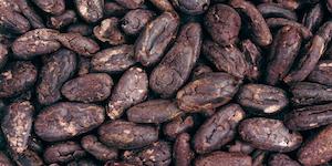 Cocoa Chocolate Beans Id 7976696 © Alena Brozova Dreamstime