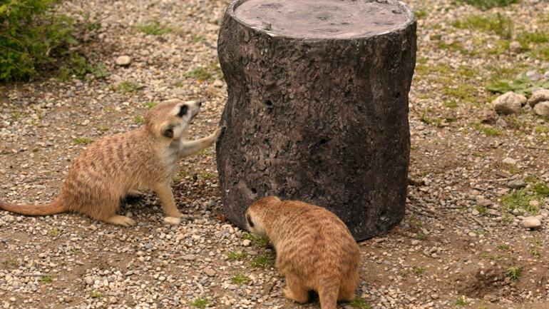 Les animaux du zoo de Cincinnati s'engagent avec les mangeoires de cricket en métal imprimées en 3D.