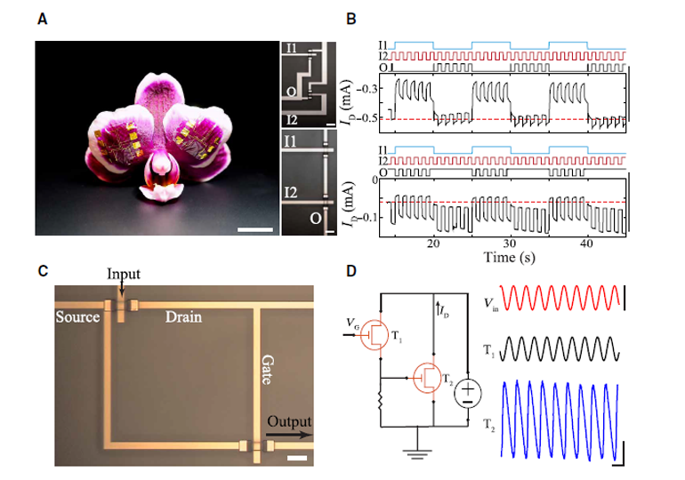 Ed Interest Transistors organiques Fig2