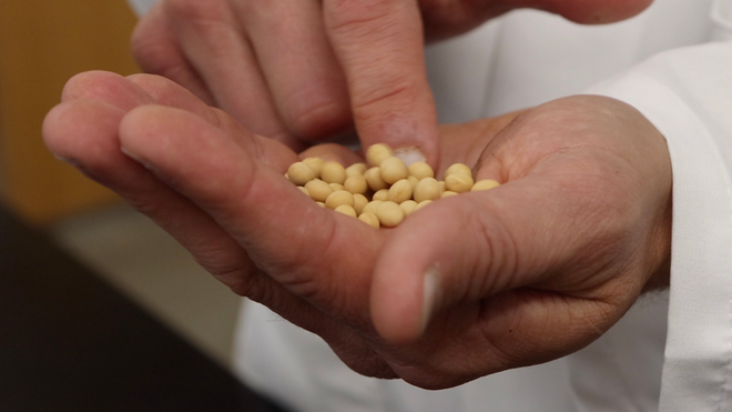 Soybeans 6044037589f7a