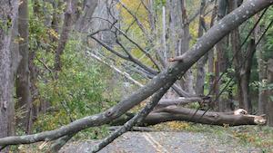 Ahead of the Storm: CL&P's Vegetation Management Plan, post Hurricane Sandy