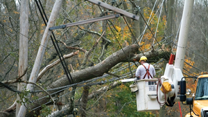 Connecticut Light & Power crews remove a tree resting on distribution lines following a storm in Greenwich, Connecticut.