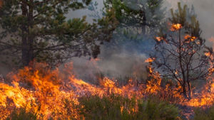 Tdworld 3435 Wildfire4