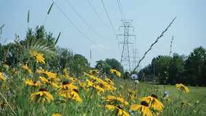 ITC and collaborators restored a mowed turf grass electrical transmission corridor back to a natural prairie in an effort to improve biodiversity and enhance the wildlife habitat.