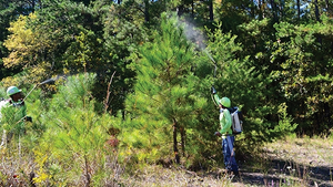 Crews apply herbicide within rights-of-way to control tall brush and restore the lowgrowing native plant communities that provide food and shelter for a wide variety of birds, insects and other wildlife.