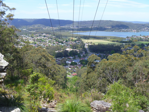 Tdworld 7245 Powerline Vegetation Australia Wildlife Walk