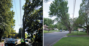 Extending pruning cycles reduces site intrusions into neighborhoods like this, leading to happier customers.
