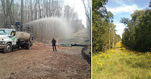 Organic hydroseeding on Columbia Gas of Virginia's ROW with pollinator mix (left). Flowering grasses and forbs on same site two years after treatment (right).