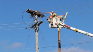Penn Power Nesting Osprey March 2020