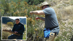 Tom Rolinski, SCE fire scientist, points out the type of growth to determine how dry the brush is.