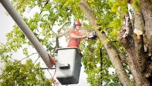 Tree Worker Getty
