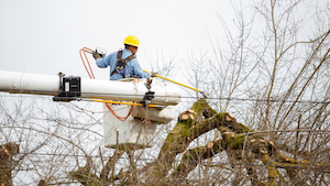 A utility worker trims a tree as a precautionary measure against wildfires