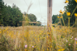 Incompatible vegetation can stunt the development of native plant communities.
