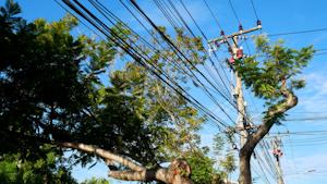 Tree Powerline Vegetation Management Lead